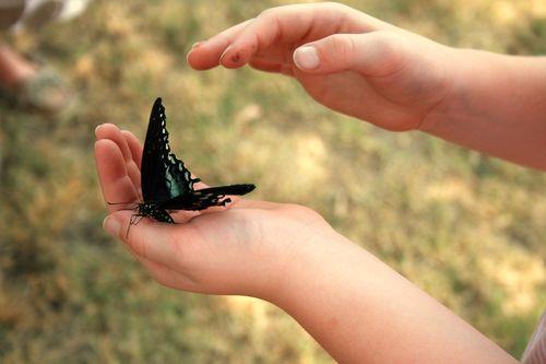 Butterfly.5