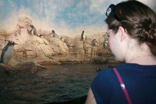 Kay and the penguins