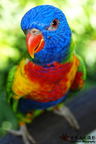 Colorful_birdie